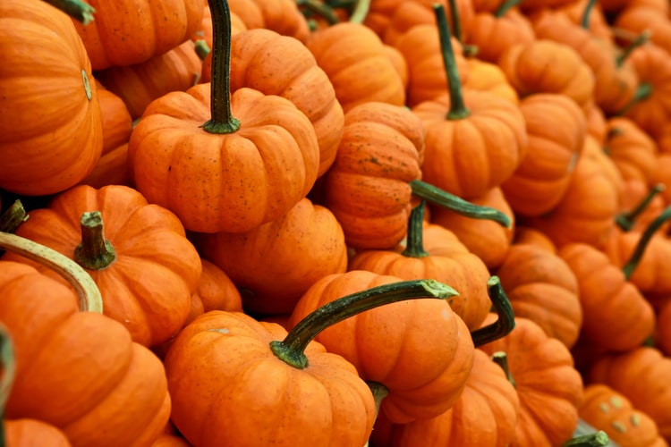 Don't Pumpkin Spice Your Garbage Disposal – Know the Limits